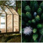 Švédi dokazujú spätosť človeka s prírodou. Vystresovaných ľudí poslali na tri dni do lesa