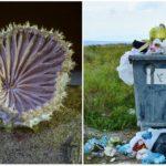 """Vedci našli nový druh """"ekologickej"""" huby, ktorá sa dokáže živiť plastom"""