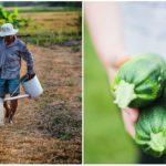 Švajčiarske mesto obyvatelia premenili na veľkú záhradu, v ktorej sa ľudia zásobujú navzájom