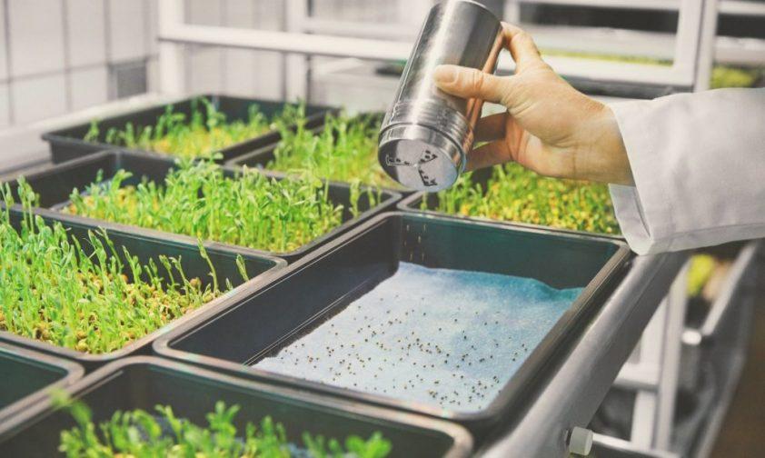 hydroponické pestovanie