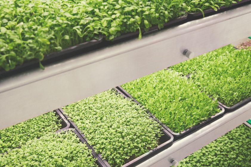 pestovanie rastlín v podaní ikei