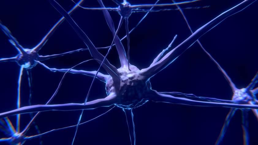 neurón v mozgu