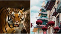 collage_tiger