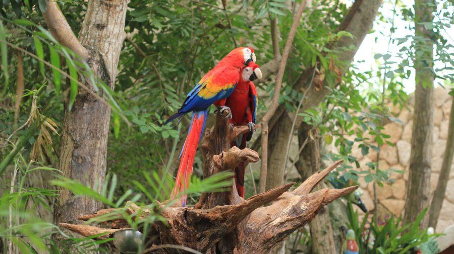 parrot-2708093_1920