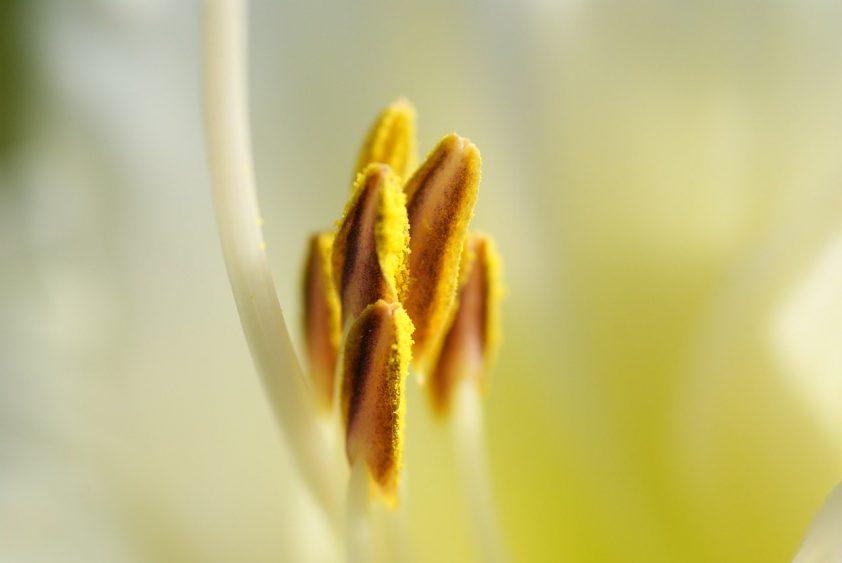 alergia na peľ