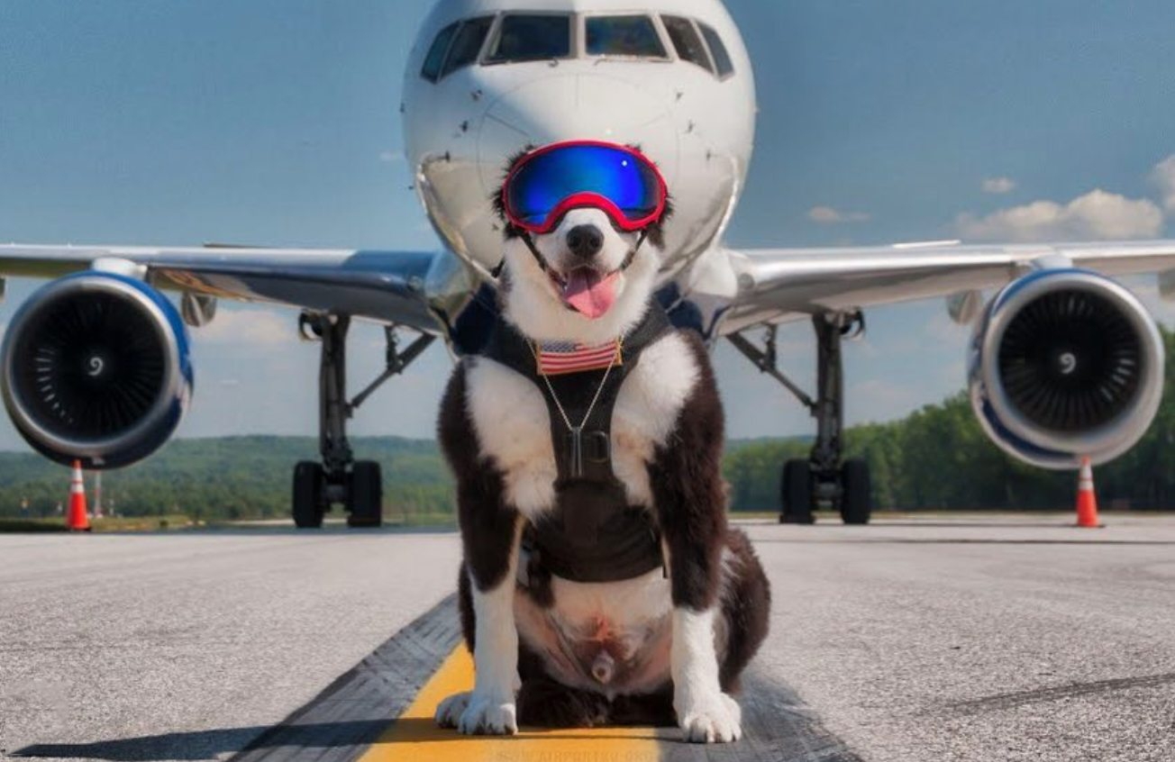 pes-zachrana-letiska