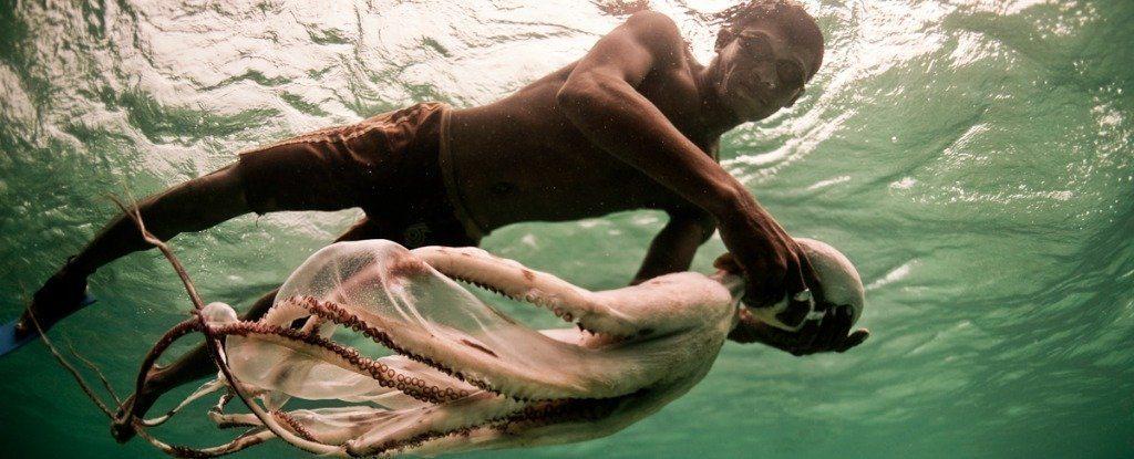 bi-bauju-divers-boats-octopus_1024