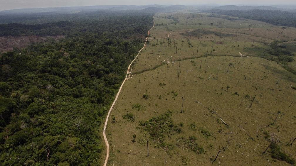 PNUDArgent-deforest