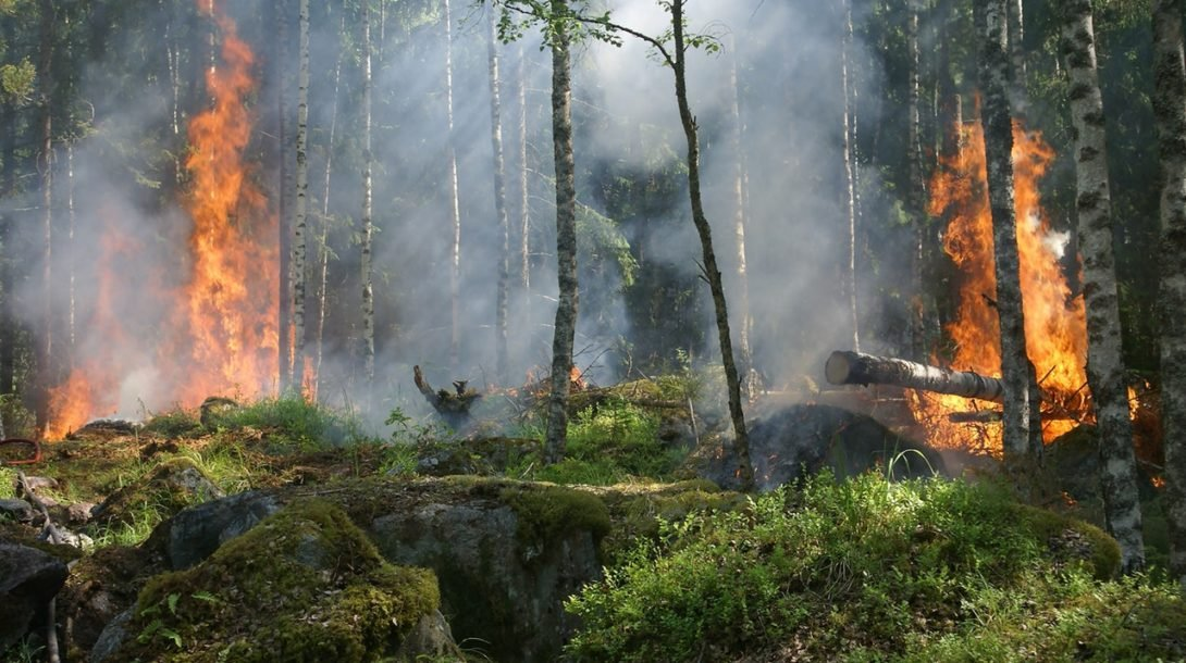 forest-fire-fire-smoke-conservation-51951