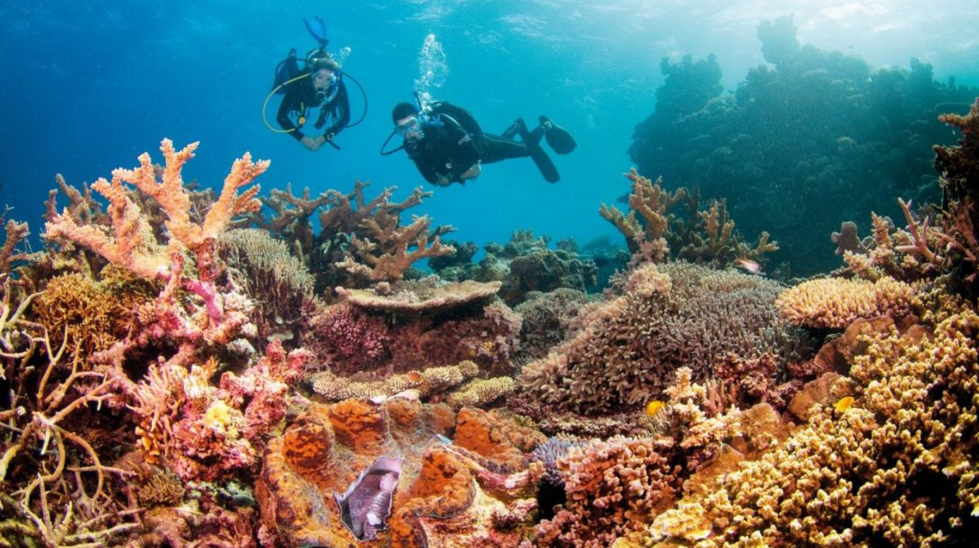 koraly