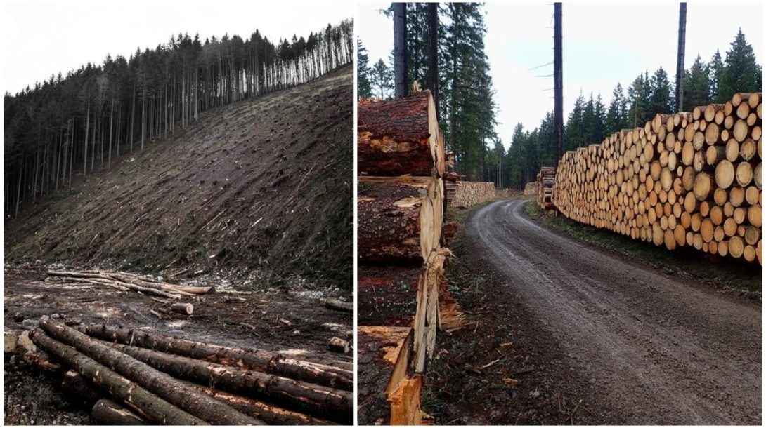 tažba les