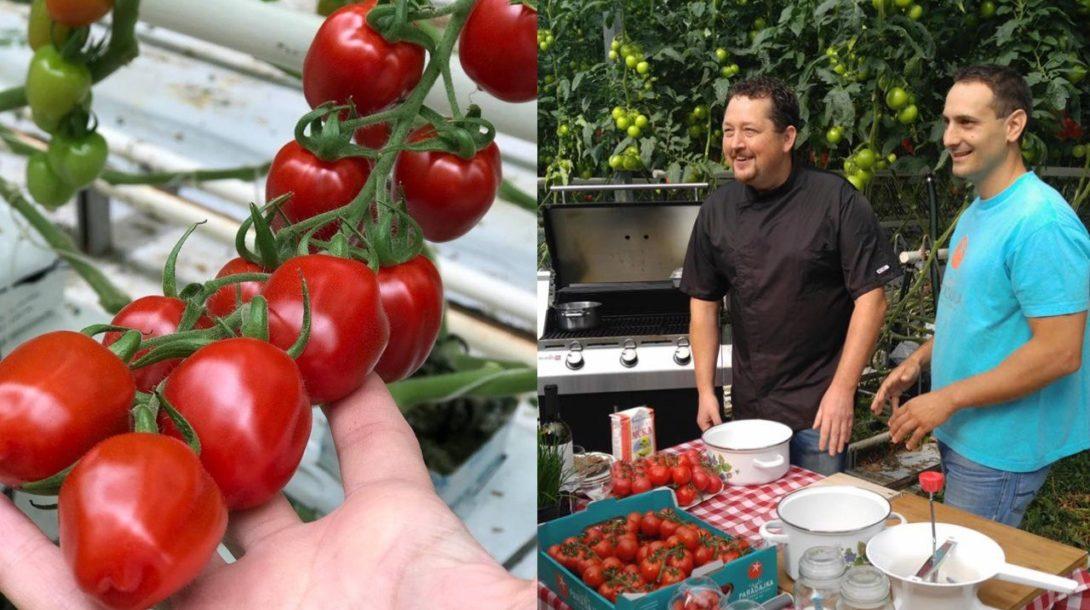 do_obchodov_paradajky