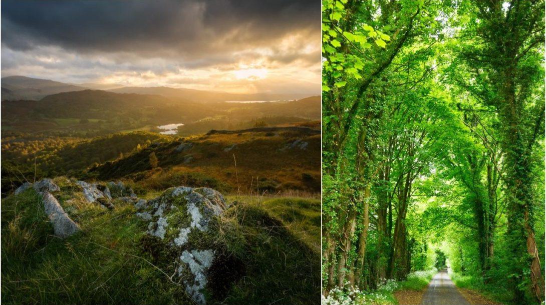 stromy irsko