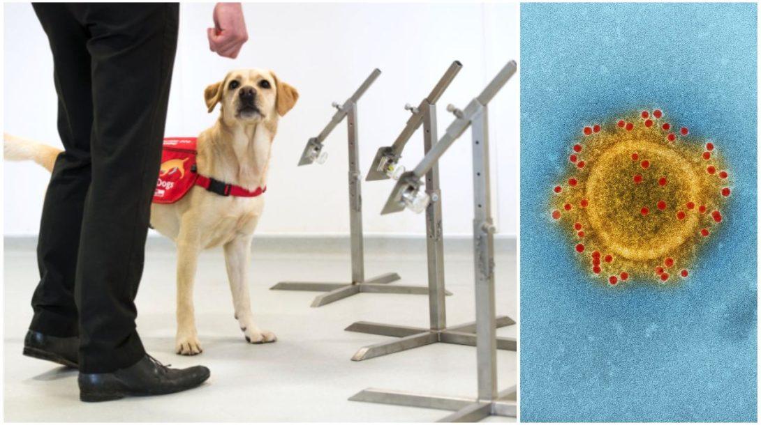 Pes vírus (1)