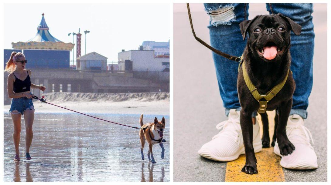 vencenie psov