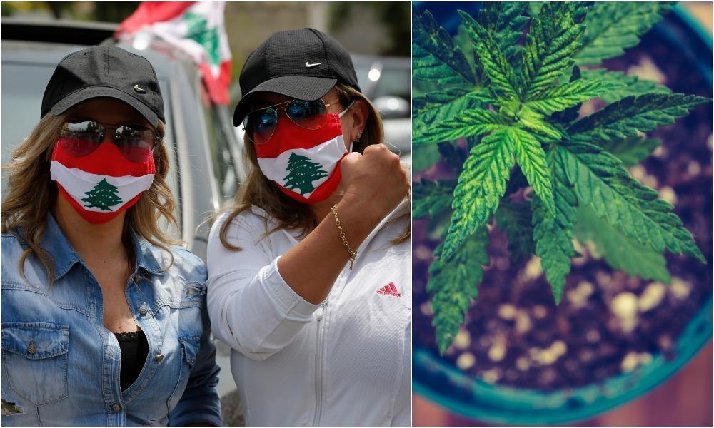 Libanon zlegalizoval pestovanie marihuany na vedecké účely