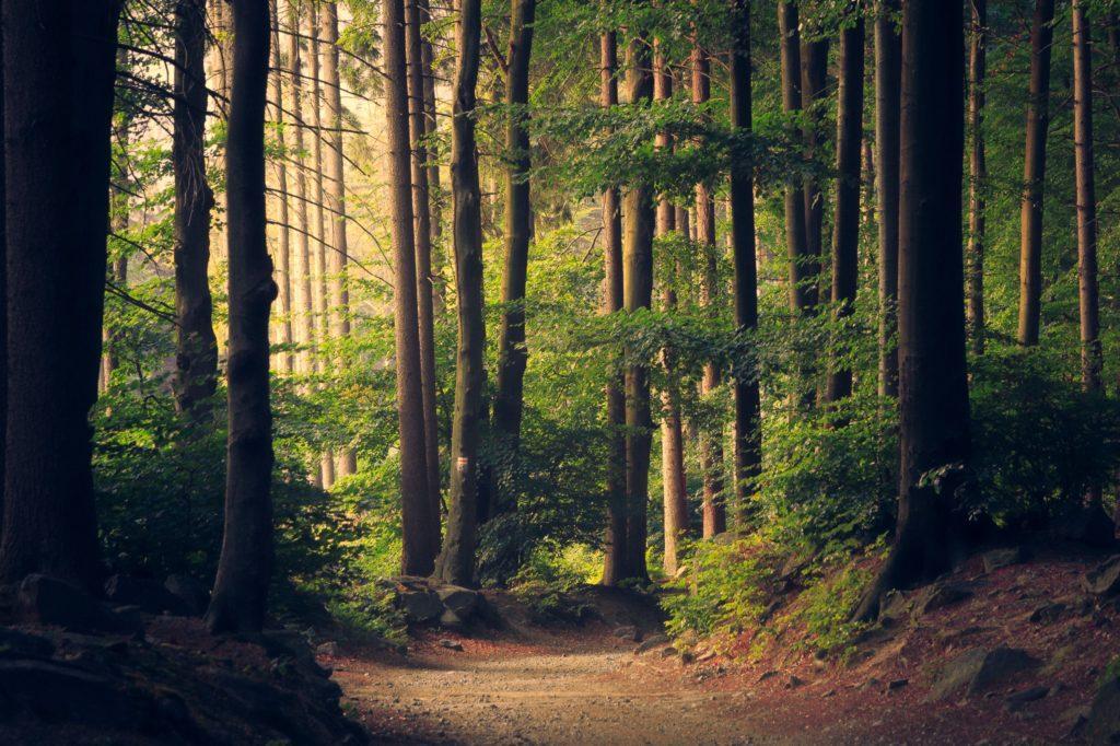 Pakistal najal tisíce pracovníkov, aby vysadili 10 miliárd stromčekov
