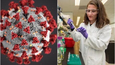 Vedci objavili nový kmeň koronavírusu. Je nebezpečnejší ako originál