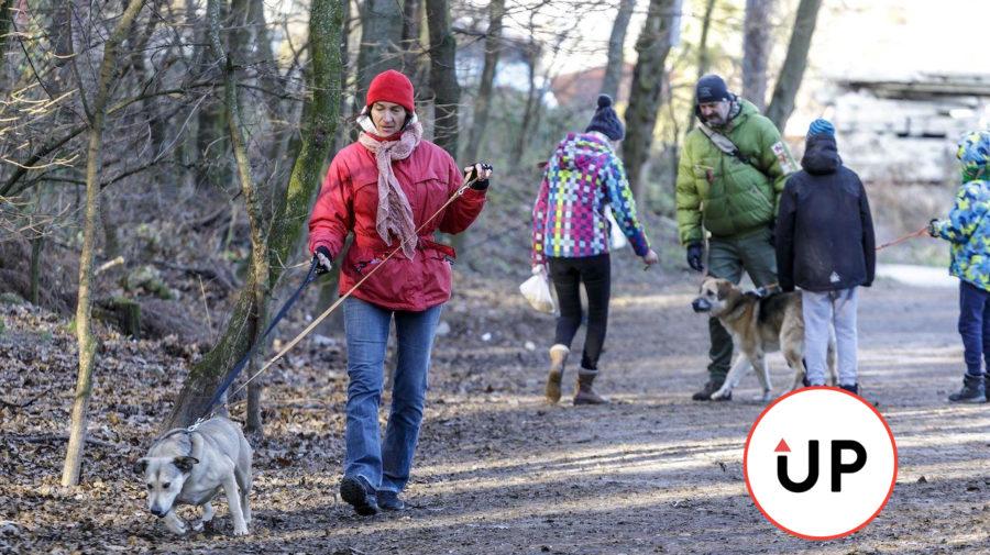 prechádzka, pes, príroda