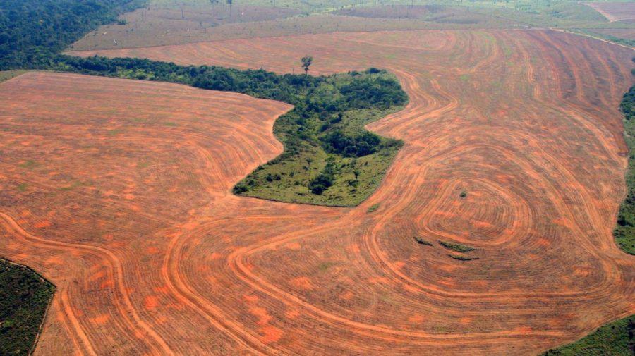 amazonský prales, odlesňovanie