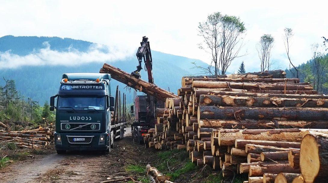 drevo tazba lesy