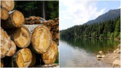 tazba dreva, lesy