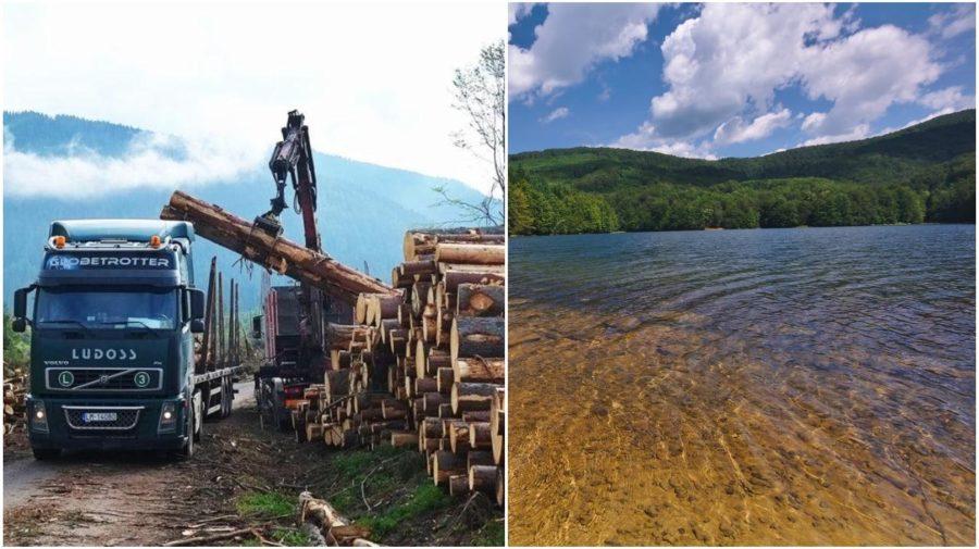 tazba drevo lesy