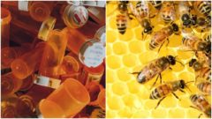 vplyv medu