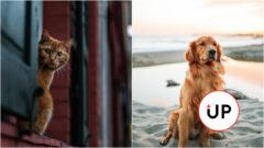 Pes či mačka