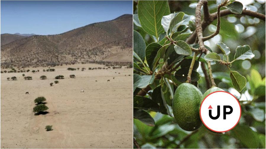 Monokultúra avokáda, Chile Petorca