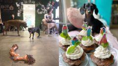 pes kaviareň bratislava veterina