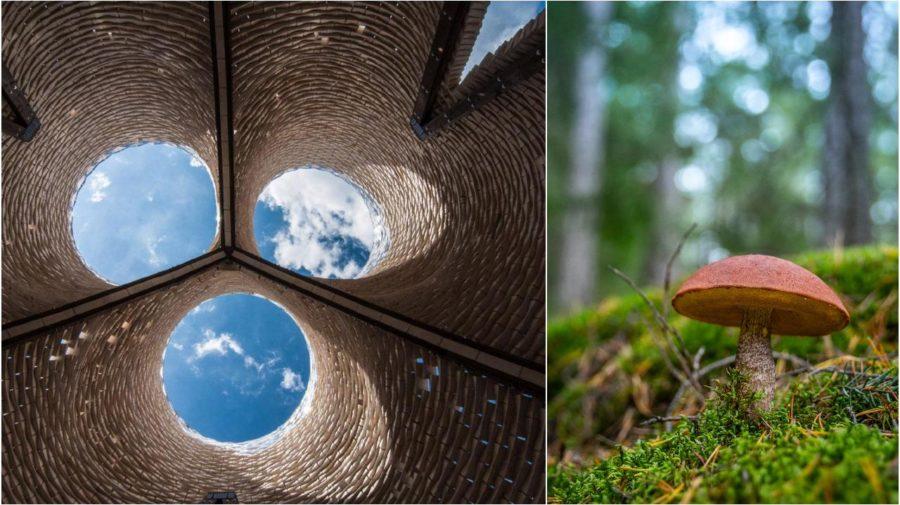 huby hriby architektúra stavba stavanie z hríbov dom z húb udržateľnosť eko enviro
