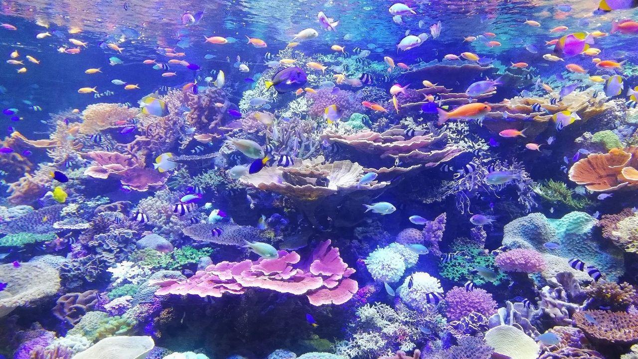 podmorský smet