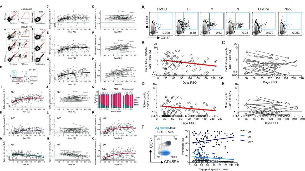 T bunky, B bunky imunita SARS-CoV-2 výsledky štúdie