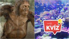 Australopitekus podmorský svet