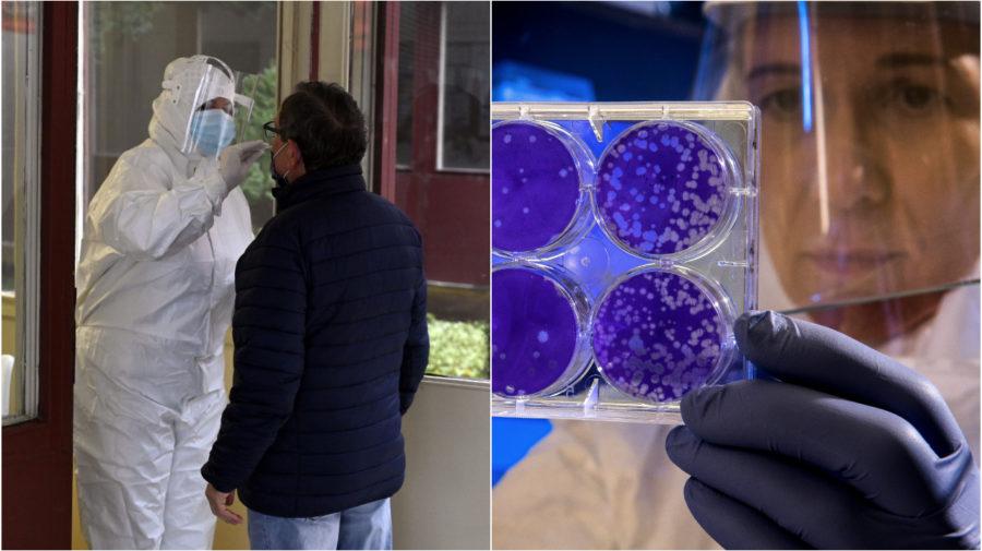 antigénový test, petriho misky