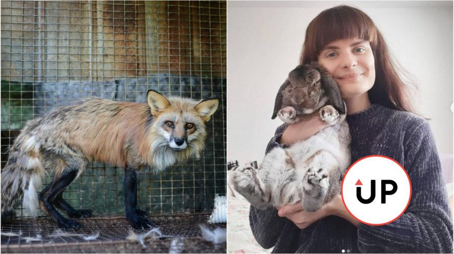 zajac, líška, klietkovy chov