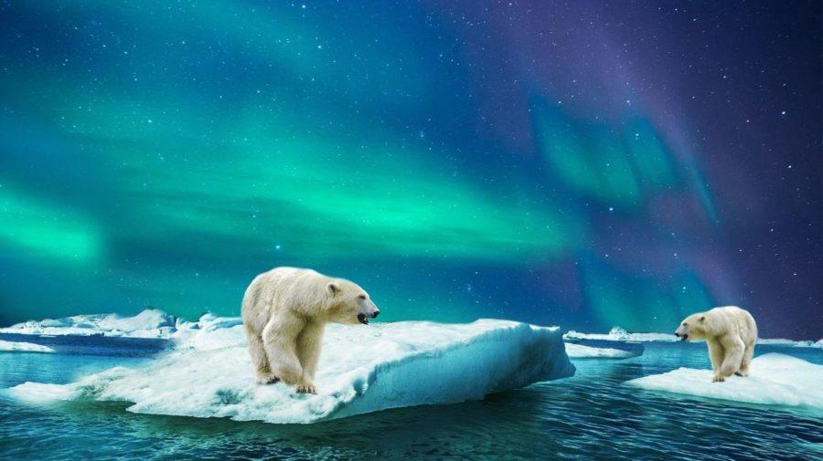 polar-bear-3065359_1920