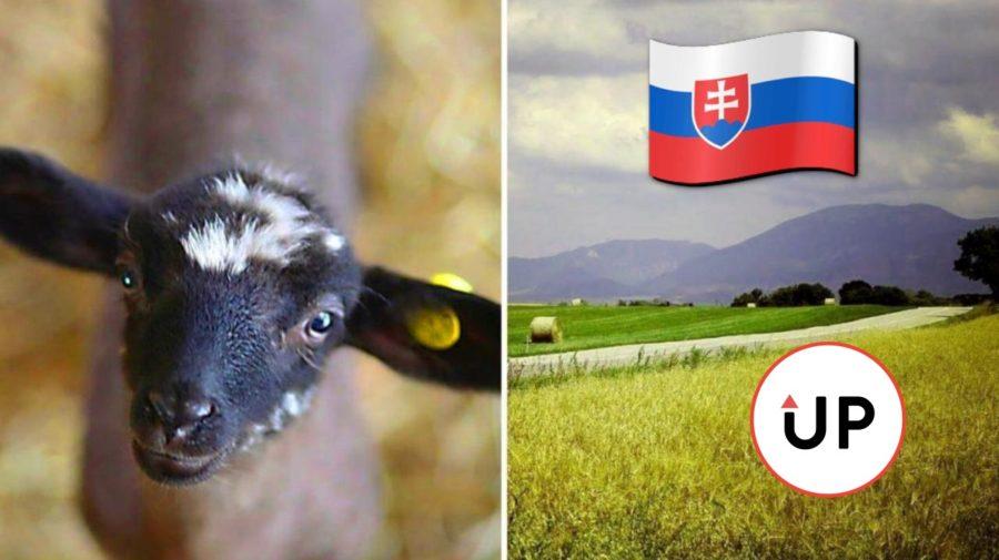 slovenskosanagro2