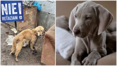 pes, retaz, sloboda zvierat