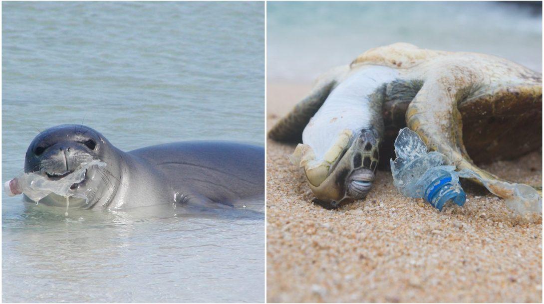 Zvieratá plast