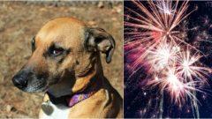 útulok, pes, ohňostroj, nový rok