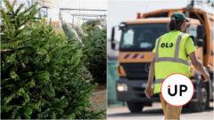 vianoce OLO odpad stromčeky