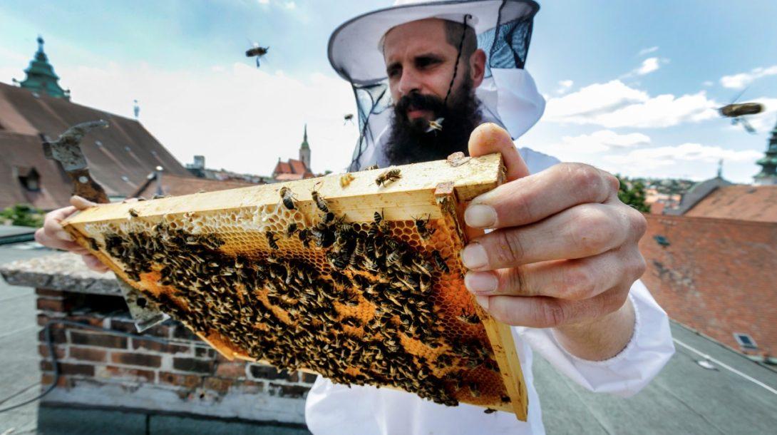 Včelár