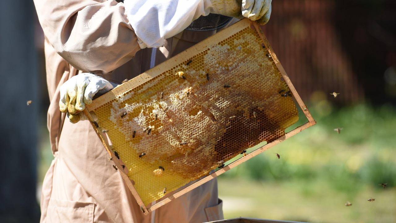 Včelí plast