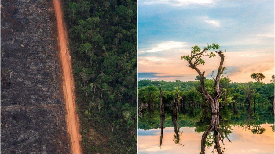 amazonia prales