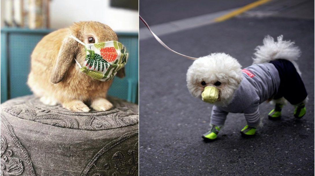 rúška pre psov, rúško pre domáceho miláčika, zajac, pes, covid