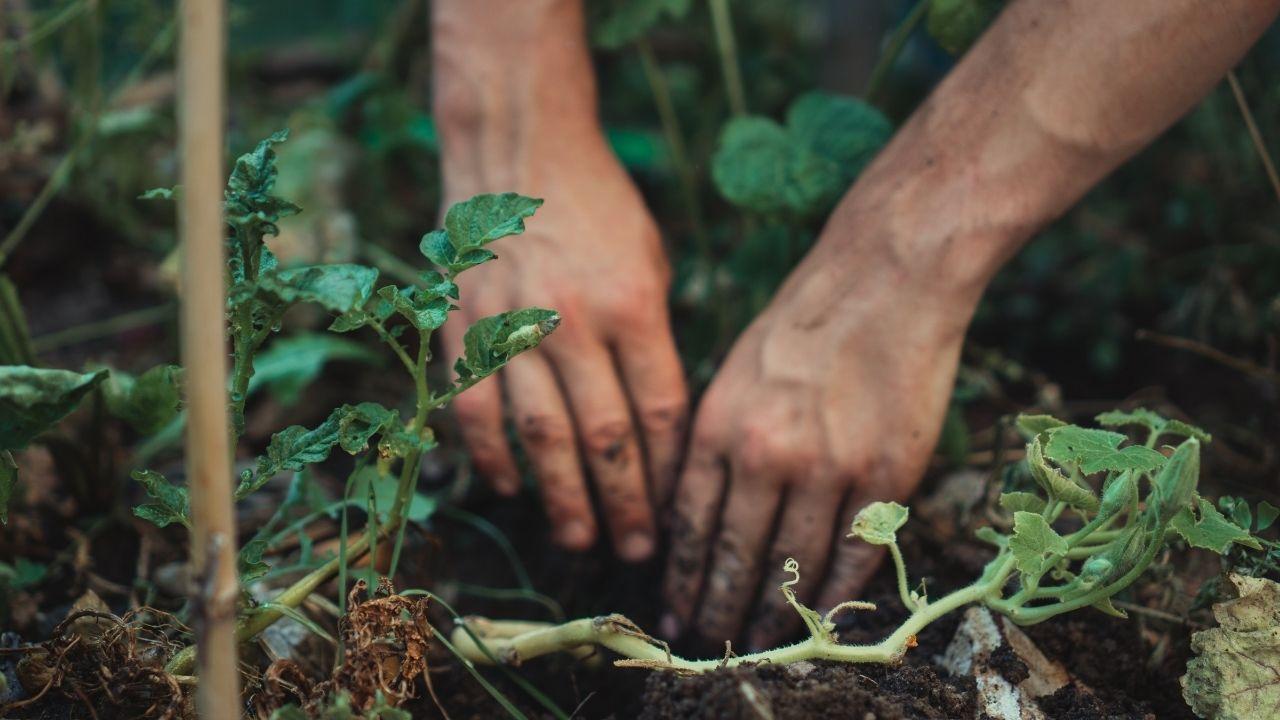 záhrada ruky práca