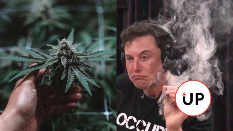 Fajčenie, Elon Musk, Marihuana
