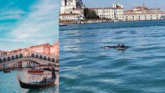 Delfíny v Benátkach